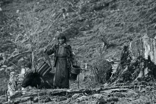 Nomad and yak, Gangtey.